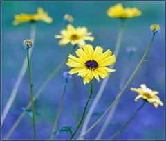Mid-Winter Wildflowers