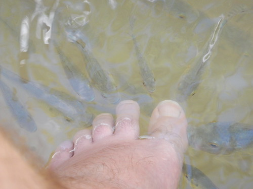 fish saintlucia stlucia westindies fishes nibble toes feet pedicure