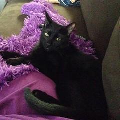 #catselfie #kittytails #pippinthehousepathercub #blackcatsrule #blackkittens #pet_feature #cute #blackbabies #blackcats #pippinthehousepathercub Good Morning y'all, Happy Laid Back Sunday