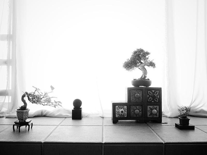 bonsai05