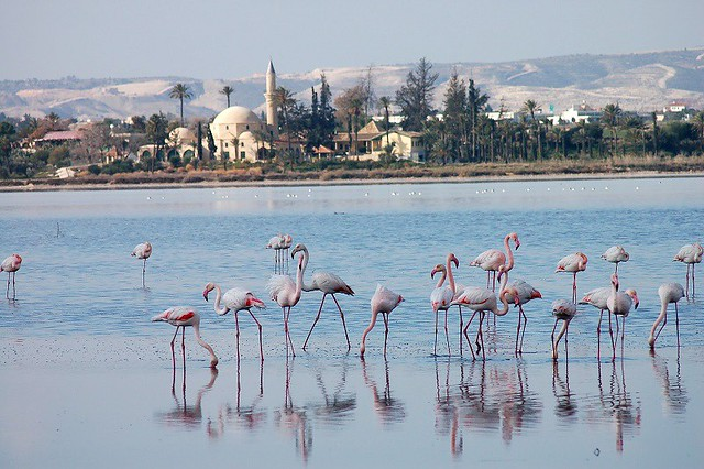 Salt Lake Larnaca