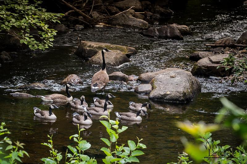 Une famille qui prend une pause dans notre ruisseau 19670101716_9e5c88b636_c