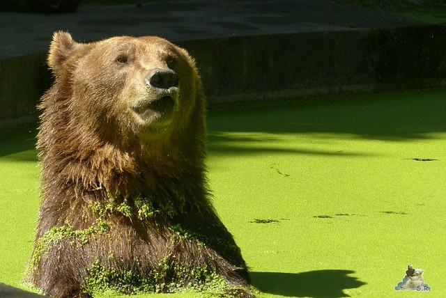 Tierpark Perleberg 09.08.2015 87
