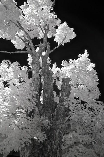 Bayside tree