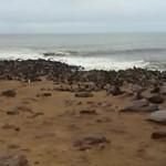 Focas en Cape Cross