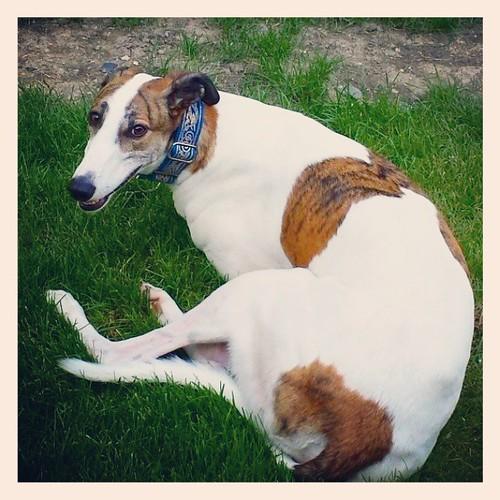 Wut? #Cane #DogsOfInstagram