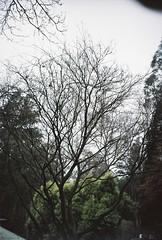 Tree in winter, 2