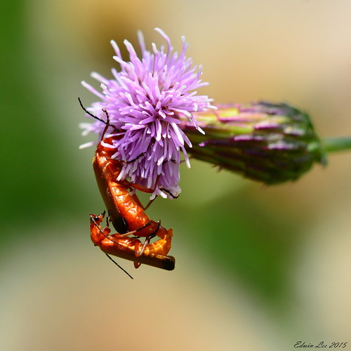 Bugslife_008