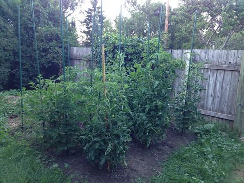 The Tomato Annex