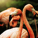 Flamingo Love by Jaimie Wylie Photography