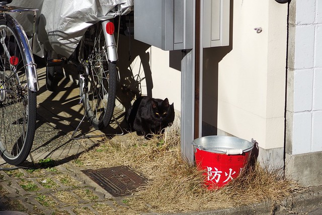 Today's Cat@2017-02-04