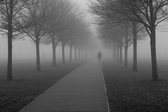 Camu o'r niwl: Caeau Pontcanna / Out of the mist: Pontcanna Fields, Cardiff