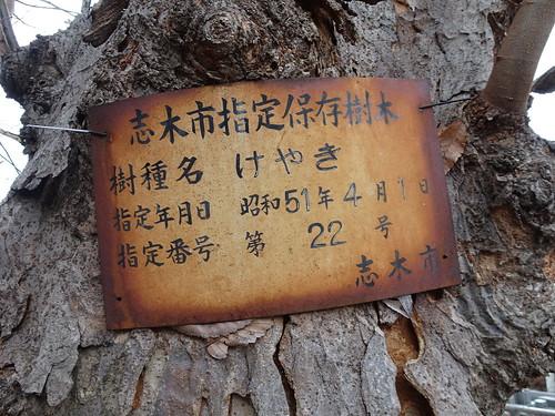 宝幢寺の保存樹木