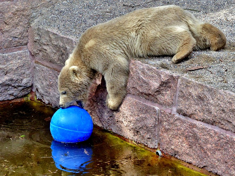 *I*want*this*blue*ball*