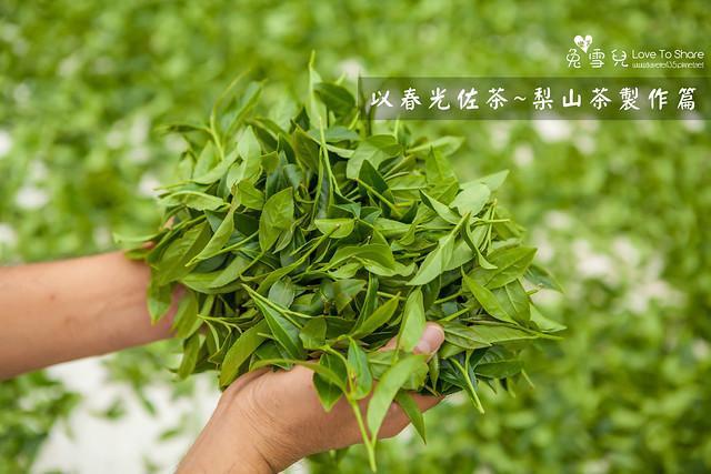 【茶葉製作過程】梨山茶園採春茶體驗遊Part2~製茶篇@梨山茶推薦-春勇茶行