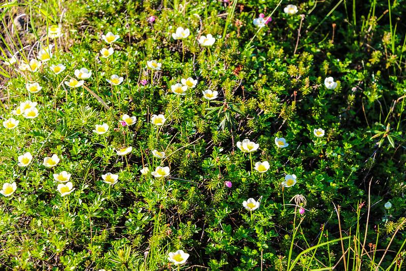 2014-07-20_00401_北海道登山旅行.jpg