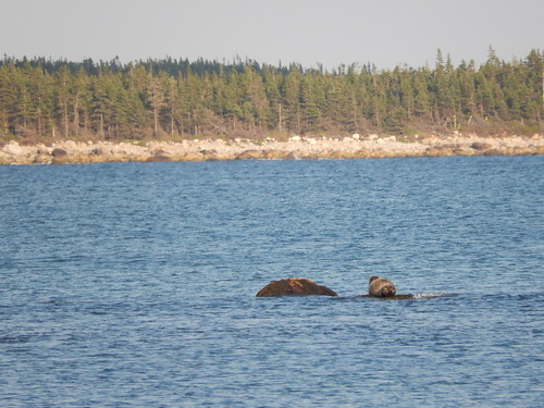 Thomas Raddall Provincial Park - strand - zeehond