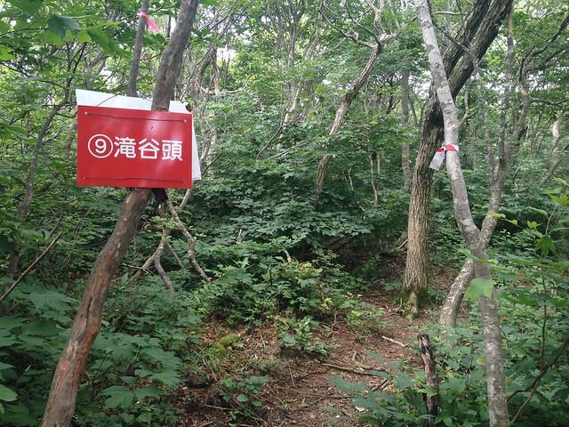 金糞岳 花房コース 滝谷頭