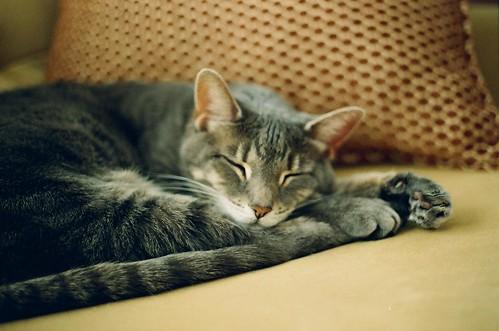 Mei Kitty