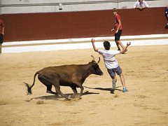 equestrian vaulting(0.0), performing arts(0.0), matador(0.0), performance(0.0), bullfighting(0.0), animal sports(1.0), cattle-like mammal(1.0), bull(1.0), tradition(1.0), sports(1.0), bullring(1.0), entertainment(1.0),