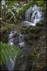 Featherstone Falls