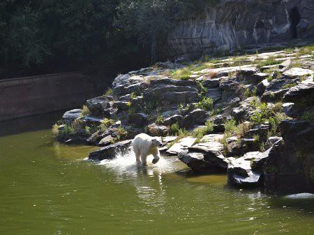 Tierpark 1 5 Recomandari turistice in Berlin