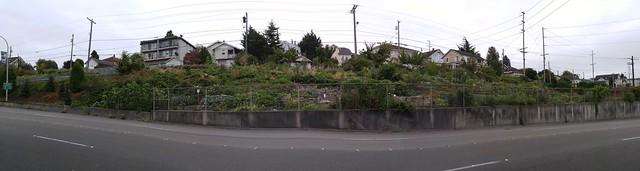 Bayside P-Patch Community Garden