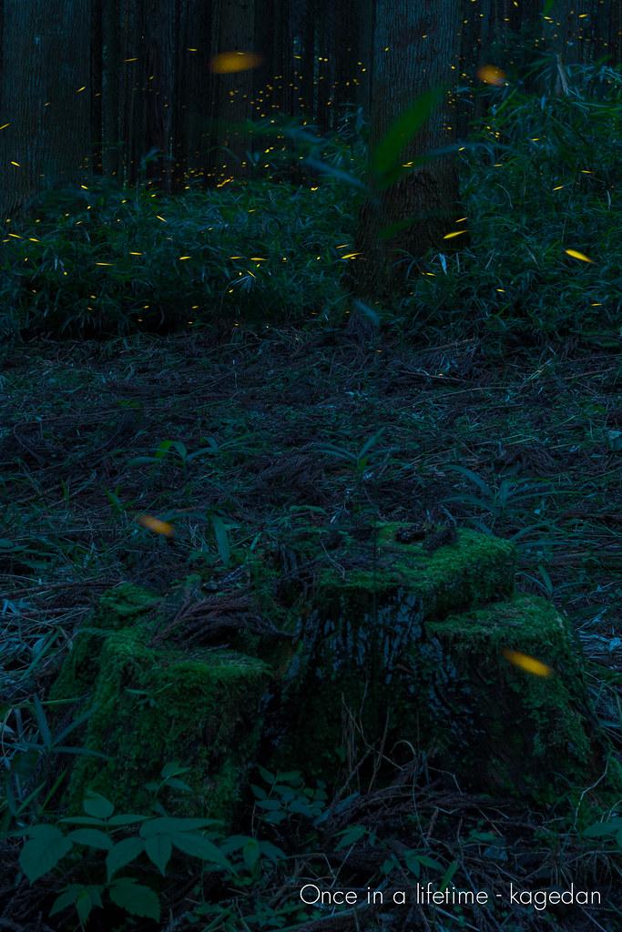 安らかな森