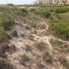 Spot the endangered gopher tortoise! #florida #endangeredspecies #gophertortoise #beach