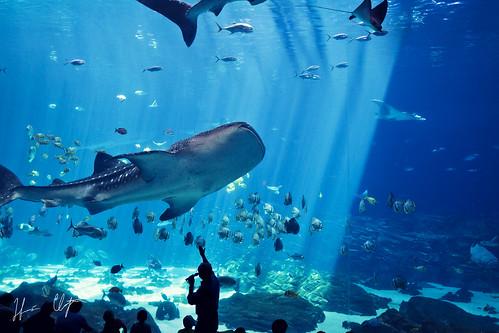 atlanta light glass aquarium tank harris viewing tigershark harrisclayton