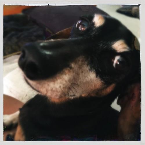 day206: my pretty Holli dog