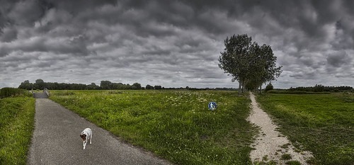 panorama dog nature amsterdam clouds landscape outdoors overcast landschap hikingtrail cloudiness amstelland polderlandscape heavycloudcover canoneos5dmarkii marijkemooyphotography heavyclouded