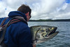 38.5 pound Chinook salmon being released at Langara Island Lodge, Haida Gwaii