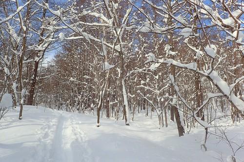 冬の手稲山