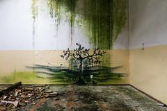 volterra-murales-03