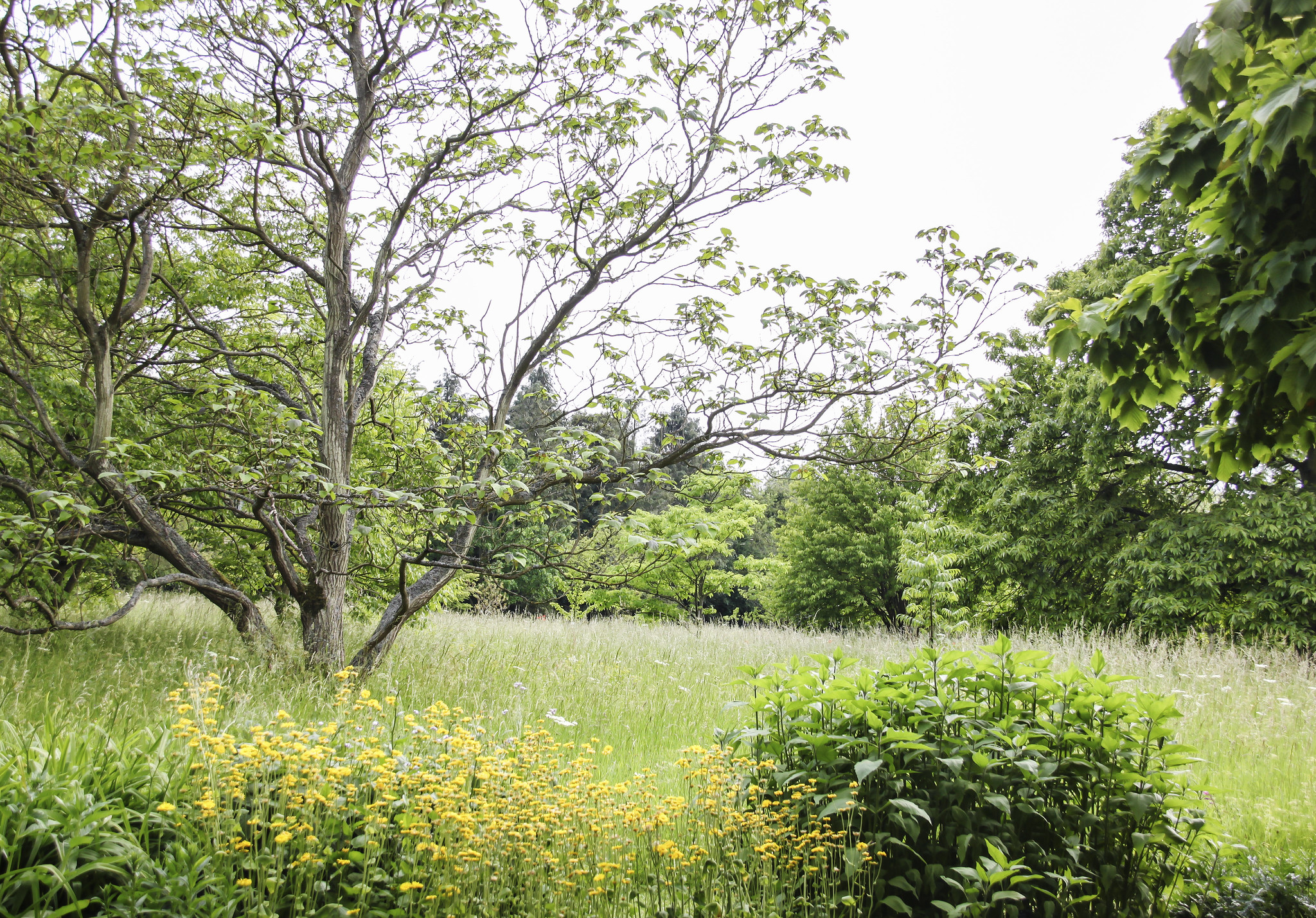 Cambridge University Botanic Garden Flickr Photo Sharing