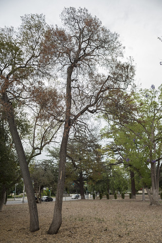 Drought Stressed Trees