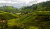 Sri Lanka Tea Plantations