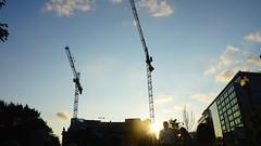 DC Dance of the Cranes 59048