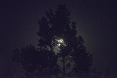 Blue Moon at Crockett Park, Warrenton, VA