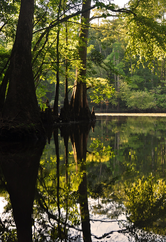 Nottoway River 8-1-15 (5)