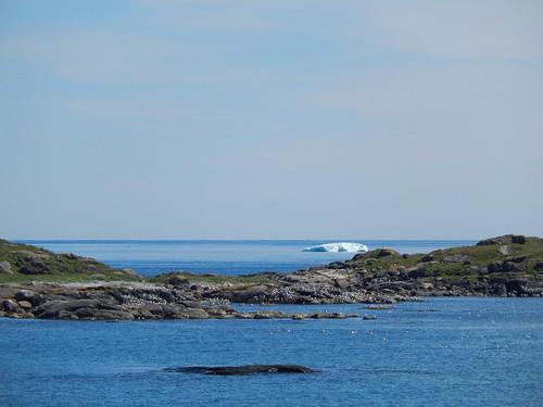 Red Bay - ijsberg vanaf Saddle Island