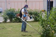 Ornato cumple trabajos en podas de árboles en parques y avenidas de la ciudad