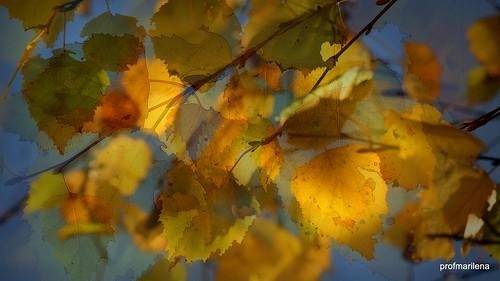 1-2016-11-008 unforgettable blue November sky