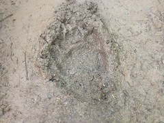 Yet Another Bear Print