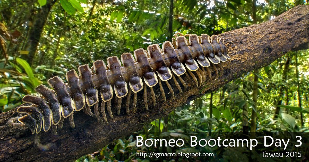 Borneo Bootcamp Tawau 2015 Day 3