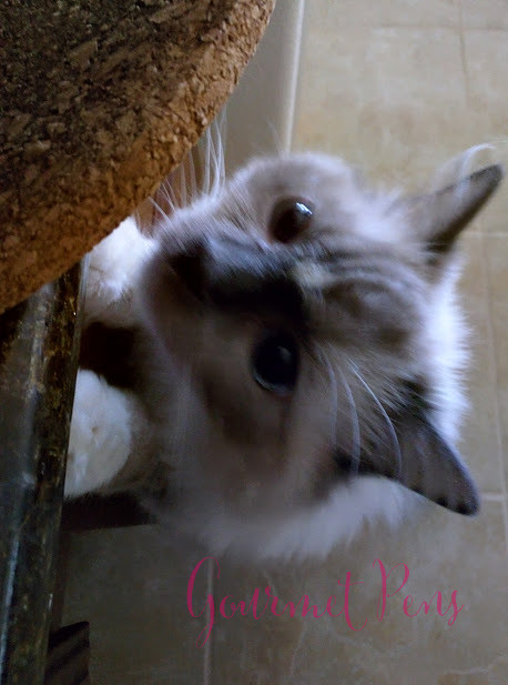 Whiskers & Paws April 2016 Edition (6)