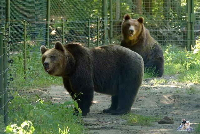 Tierpark Perleberg 09.08.2015 100