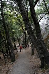 trail to mirror lake