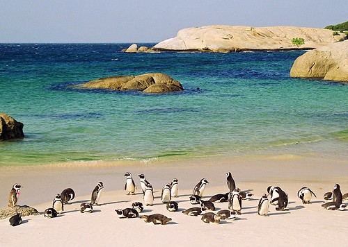 penguin party - south africa